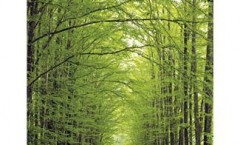 Road covered with a tunnel of trees